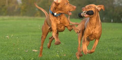 állatbarát csomag, kisállattal érkezőket is szívesen fogadunk, ez a csomag a kutyák kényeztetésére szolgál